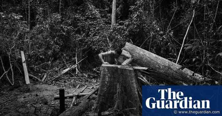 Amazônia: life and death in the Brazilian rainforest