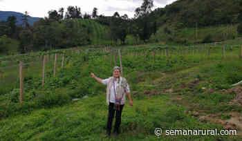 La granja que llenó de color los campos de Suratá - Semana Rural