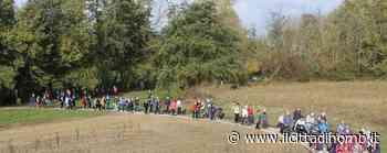 A Bellusco ripartono i gruppi di cammino: l'appuntamento è in piazza Kennedy - Il Cittadino di Monza e Brianza