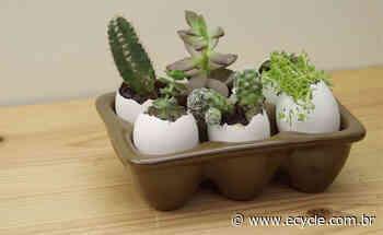 Acesse a matéria Use a casca de ovo para fazer uma sementeira - eCycle