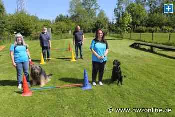 Hundesportverein Nordenham: Vom Zwergpinscher bis zum Pitbull sind alle willkommen - Nordwest-Zeitung
