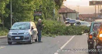 SAN MAURO TORINESE. Un albero cade e spacca il vetro di un'auto in transito - giornalelavoce