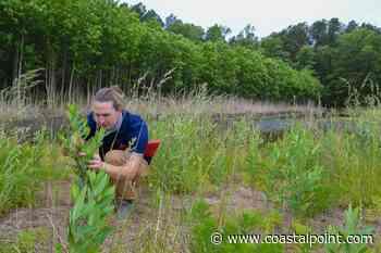 Old farmland evolves into wetlands forest project near Frankford - Coastal Point