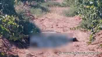 Terror en Caborca: Trabajadores agrícolas encuentran cadáver en viñedo de San Felipe - TRIBUNA