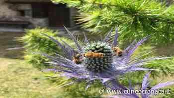 MONDOVI'/ Giornata mondiale delle api: 2 eventi online con il Comizio Agrario- Cuneocronaca.it - Cuneocronaca.it