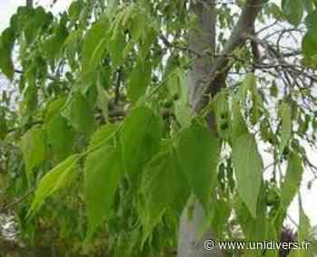 Auprès de mon arbre 31320 Castanet-Tolosan samedi 19 juin 2021 - Unidivers