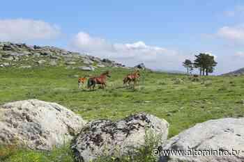 Viana do Castelo acolhe primeiro Congresso Internacional de Equinologia e Turismo Equestre em julho - Altominho TV