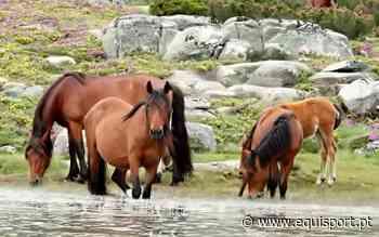 Viana do Castelo recebe Congresso Internacional de Equinologia e Turismo Equestre | EQUISPORT - Equisport Online