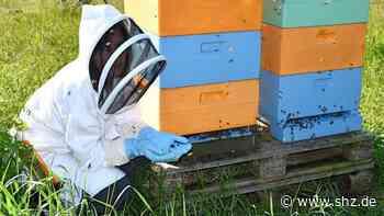 Rund 1000 Tiere verenden: Tod im Bienenstock in Holm: Experten bestätigen Gift-Verdacht | shz.de - shz.de