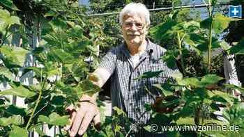 Garten in Varel: Martin Heinze ist von Kletterpflanzen umringt - Nordwest-Zeitung