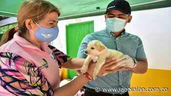 Atentos a la jornada de atención animal en Los Patios   Noticias de Norte de Santander, Colombia y el mundo - La Opinión Cúcuta