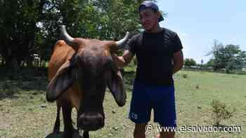 Elmer Roble, el Cangrejito que cuida vacas cuando no juega con la Selecta de Playa   Noticias de El Salvador - elsalvador.com
