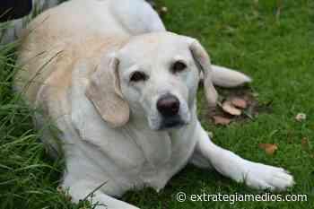 Las mascotas tendrán cédula en Chipaque, Cundinamarca - Extrategia Medios