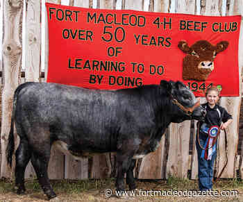 Fort Macleod 4-H Beef Club holds achievement day - Macleod Gazette Online
