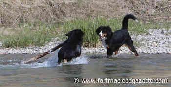Puppy Love donation aids off-leash park plan - Macleod Gazette Online