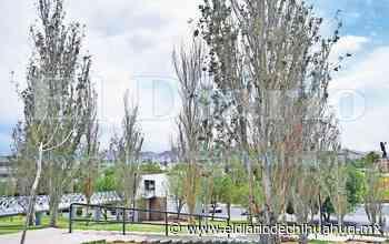 Se secan más de 30 árboles en El Palomar - El Diario de Chihuahua