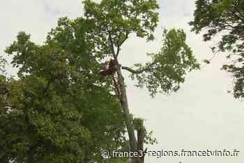 Fusion des hôpitaux Robert-Picqué et Bagatelle à Talence : des arbres abattus pour construire une résidence - France 3 Régions