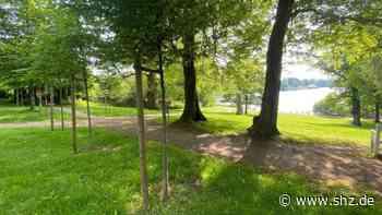 Bordesholmer See: Fielmann stiftet 70 Bäume für die Klosterinsel in Bordesholm | shz.de - shz.de