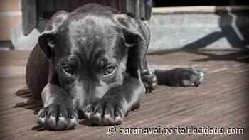Online Prefeitura de Terra Rica abre canal para denúncias de maus-tratos aos animais 04/06 - ® Portal da Cidade | Paranavaí
