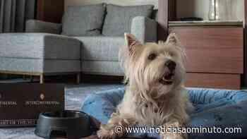 InterContinental Lisbon tem ofertas para a família e animais de estimação - Notícias ao Minuto