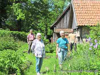 Borgholzhausen: Lilien mit Schokoladenduft - Borgholzhausen - Westfalen-Blatt