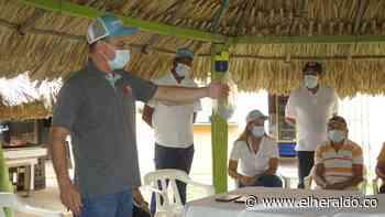450 campesinos se benefician con reactivación agropecuaria en Sincelejo - EL HERALDO