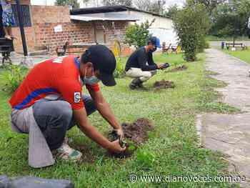 Pobladores de Lamas realizan plantación de árboles - Diario Voces