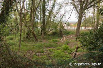 Les Clayes-sous-Bois - Une zone Espaces boisés classés a-t-elle été endommagée ?   La Gazette de Saint-Quentin-en-Yvelines - La Gazette de Saint-Quentin-en-Yvelines