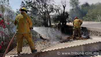 Incendios se vuelven recurrentes en Huatabampo; afectan a las familias vulnerables - TRIBUNA