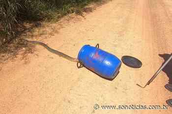 Bombeiros capturam serpente Caninana em Alta Floresta - Só Notícias