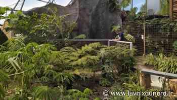 Le jardin du Beau Pays à Marck permet de voyager près de chez soi - La Voix du Nord