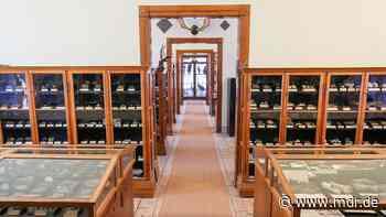 Nach Havarie: Naturalienkabinett Waldenburg fühlt sich alleine gelassen - MDR