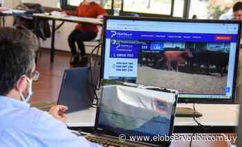 Pantalla Uruguay vendió el 65% de los lotes antes de los cinco minutos - El Observador