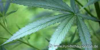 Rhein-Sieg: Paar in Hennef züchtet Cannabispflanzen auf Fensterbank - Kölnische Rundschau