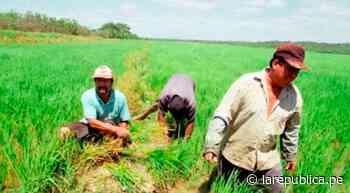 Sechura: trasladan a la PCM propuesta para reducir la desnutrición - LaRepública.pe