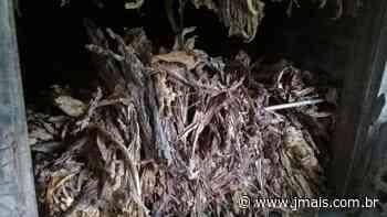 Celesc indenizará produtor rural de Canoinhas por falta de luz - JMais