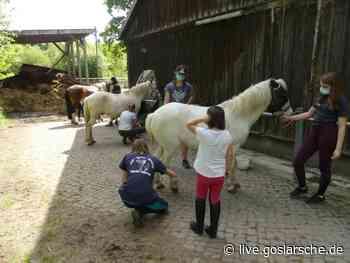 Schnuppernachmittag bei den Ponys | Clausthal-Zellerfeld - GZ Live