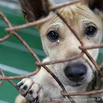 Castramóvel, UBS Animal e Ambulância Vet: Cruz Alta investe pesado na proteção animal - Rádio Progresso de Ijuí