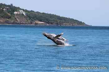 Ilhabela abre exposição fotográfica 'Baleias e Golfinhos' - Litoral Norte