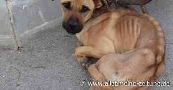 Futterspendenaktion: Tierhilfe Armsheim bittet um Mithilfe - Allgemeine Zeitung