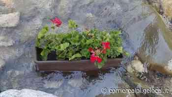 Agordo, vandalizzati i fiori - Corriere Delle Alpi