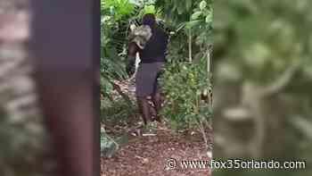 Man caught on camera, accused of attacking Lake Eola swan - FOX 35 Orlando