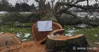 Gibt es wieder eine Baumschutzsatzung in Kirchlengern? - Neue Westfälische