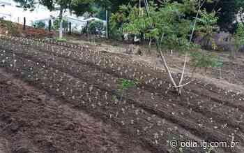 Horta comunitária é cultivada no Centro Poliesportivo de Itaperuna - Jornal O Dia