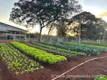 Horta da Fazenda da Esperança produz conhecimento e produtos com qualidade – Jornal do Oeste - Jornal do Oeste
