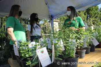 Drive-thru incentiva a troca de mudas por doações na Horta Comunitária Joanna de Ângelis - Jornal NH