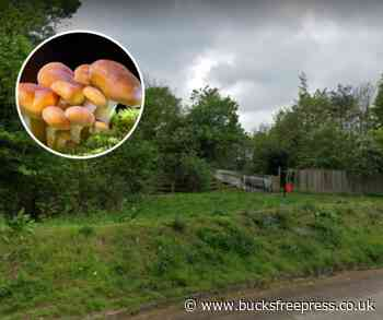 Woman is attacked whilst picking mushrooms in broad daylight in Beaconsfield - Bucks Free Press