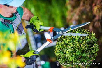Informagiovani Carmagnola, due incontri per conoscere il lavoro nel verde - Il carmagnolese