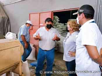 Gobierno adquiere frijol chiricano para Panamá Solidario - Chiriquí - frecuenciainformativa.com