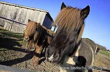 Bauherr darf Pferde halten - Schwanau - Badische Zeitung - Badische Zeitung